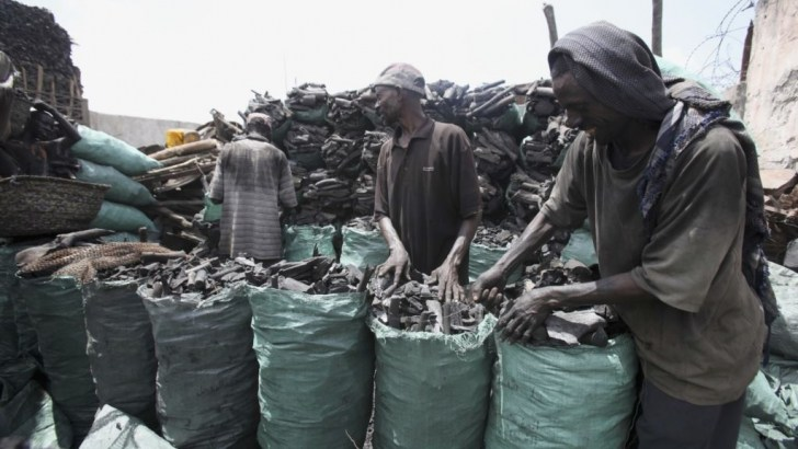 charcoal-export-business-Nigeria