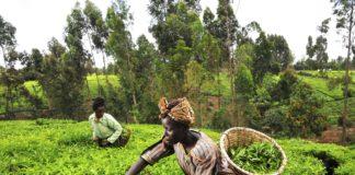 farmers nigeria africa SME Digest
