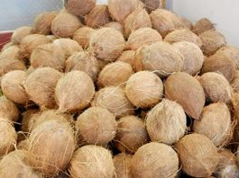 Coconut Dealers to Earn N120bn from Export Market this Year